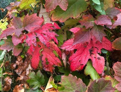 Feuillages aux couleurs d'automne