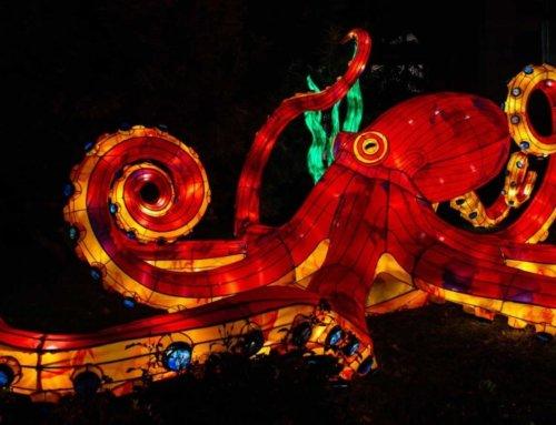 Sculptures illuminées géantes au Jardin des Plantes du 18 novembre 2019 au 19 janvier 2020