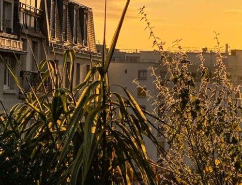 Au petit matin sur mon balcon parisien ensoleillé