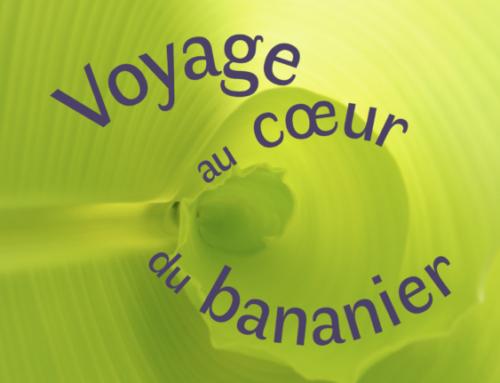Exposition «Voyage au coeur du bananier» à la SNHF