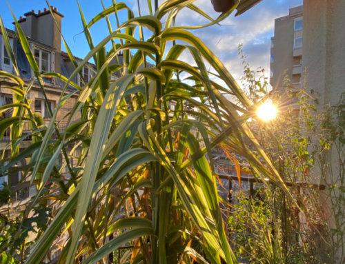 Matin de Noël ensoleillé sur mon balcon parisien
