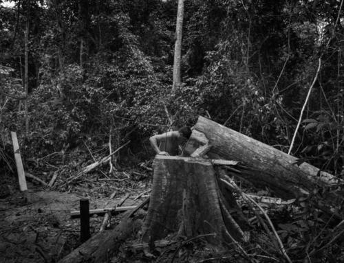 Prix Carmignac du photojournalisme, 10ème édition sur l'Amazonie