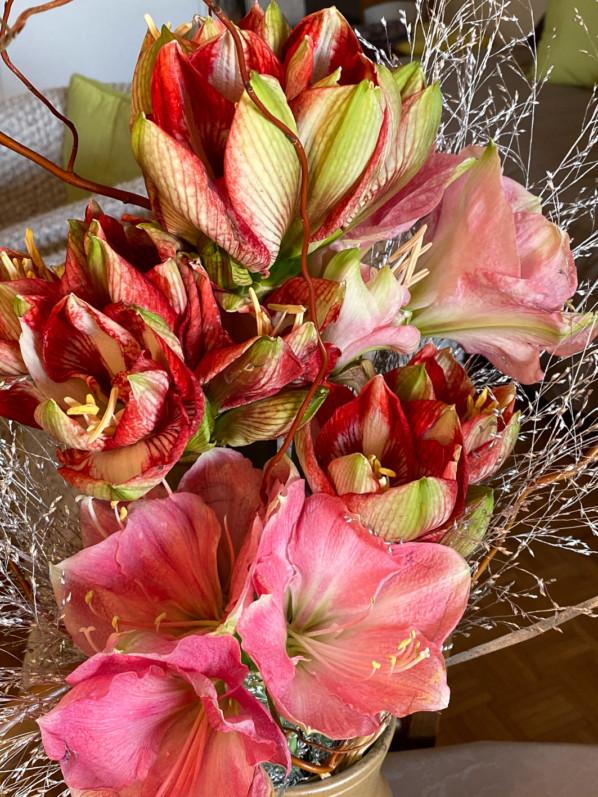 Bouquet d'amaryllis et graminées argentées, fleurs coupées, Paris 12e (75)