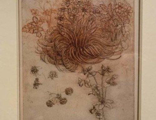 Étoile de Bethléem, anémone et euphorbe, Léonard de Vinci