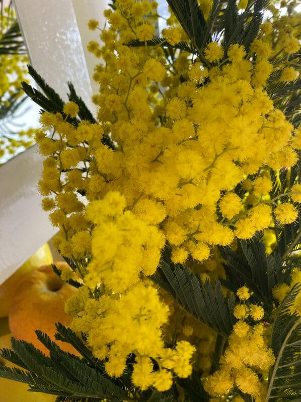 Bouquet de mimosa, fleurs coupées, Paris 19e (75)