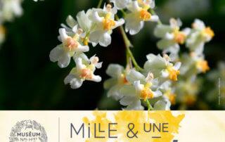 8e édition de Mille & Une Orchidées, Grandes Serres, Jardin des plantes, MNHN, Paris 5e (75), février et mars 2020