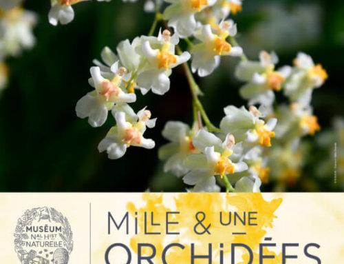 Exposition Mille & une orchidées dans le Jardin des Plantes de Paris du 5 février au 2 mars 2020