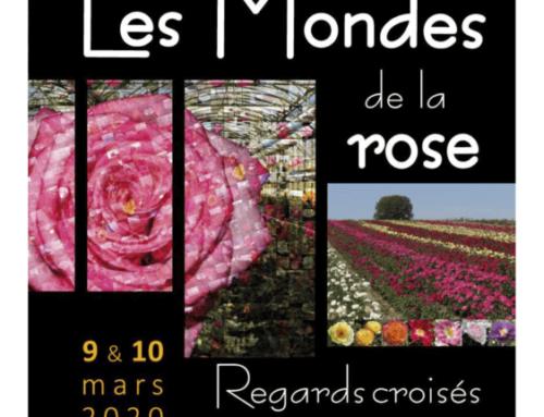 """Inscriptions ouvertes pour le colloque """"Les mondes de la Rose : regards croisés"""" les 9 et 10 mars 2020"""