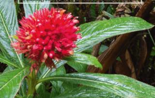 Florantilla, Flore photographique des Petites Antilles, César Delnatte, Michel Galtier, Frédéric Marchal, André Exbrayat, Exbrayat, janvier 2020