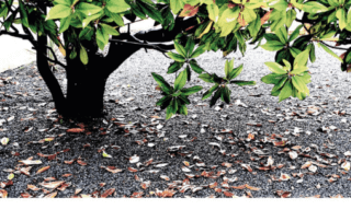 L'arbre aux feuilles d'argent, Marc Bouznah, Éditions du Panthéon, février 2020