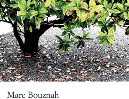 L'arbre aux feuilles d'argent