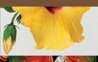 Narcisse ou la floraison des mondes Avec les contributions de Hicham Berrada, Delphine Chanet, Gilles Clément, Emanuele Coccia, Vanessa Desclaux, Sixtine Dubly, Suzanne Husky, Claire Jacquet, Suzanne Lafont, Guillaume Logé, Magalie Meunier, Starhawk, Éditions Actes Sud, décembre 2019