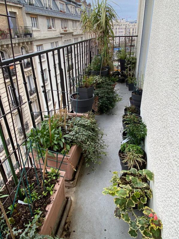 Avant la tempête Ciara, en hiver sur mon balcon parisien, Paris 19e (75)