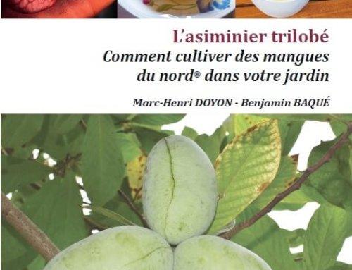 L'asiminier trilobé, ou comment cultiver des mangues du nord dans votre jardin