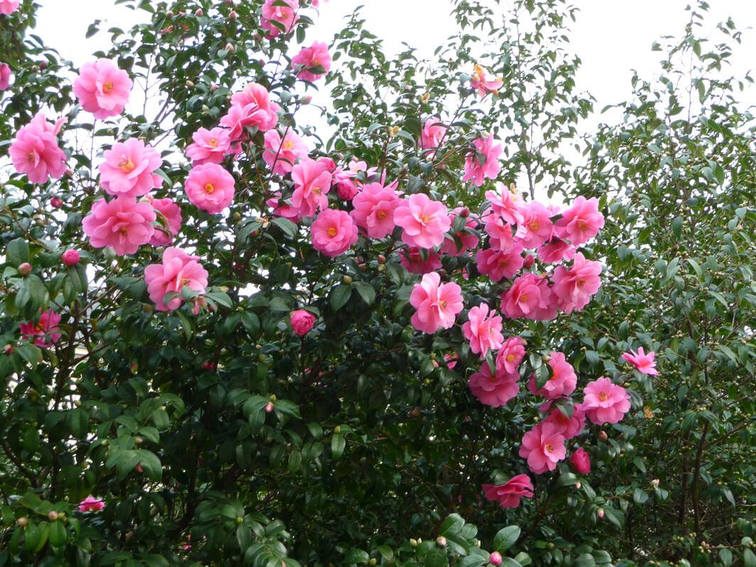 Graines De Fleurs Qui Poussent Très Vite jardinage de mars - paris côté jardin