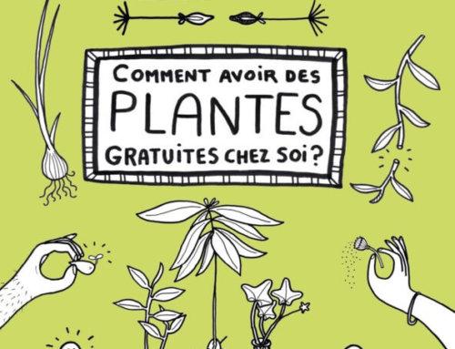 Comment avoir des plantes gratuites chez soi