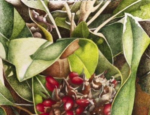 """""""Plantes et Insectes"""", exposition des aquarelles de Véronique Frampas"""