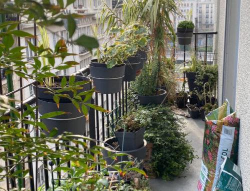 Confinement et jardinage sur balcon