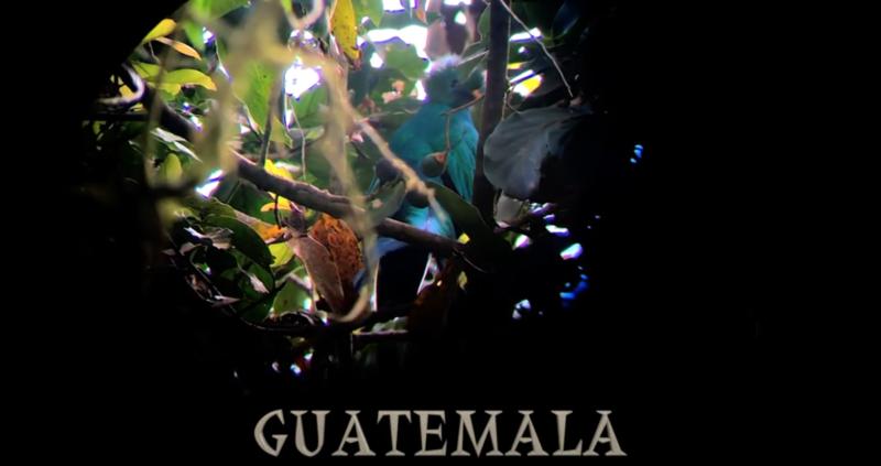 Field trip with Patrick Blanc in Guatemala, Pascal Héni