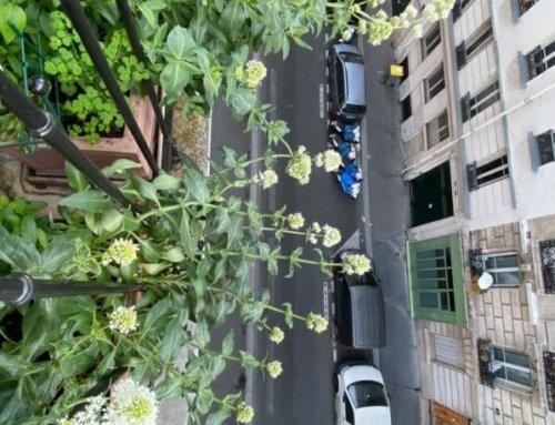Vertige et jardinage dans les airs