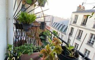 Au début du printemps sur mon balcon parisien nettoyé et planté, Paris 19e (75)