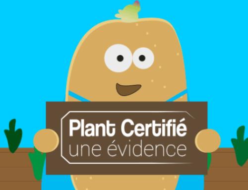Saga vidéo autour de la pomme de terre avec le plant certifié en acteur vedette