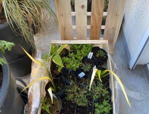 Ma commande de plantes de la Pépinière Delabroye est arrivée !