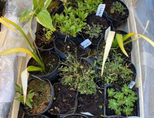 43% des Français disent jardiner davantage durant le confinement, et vous ?