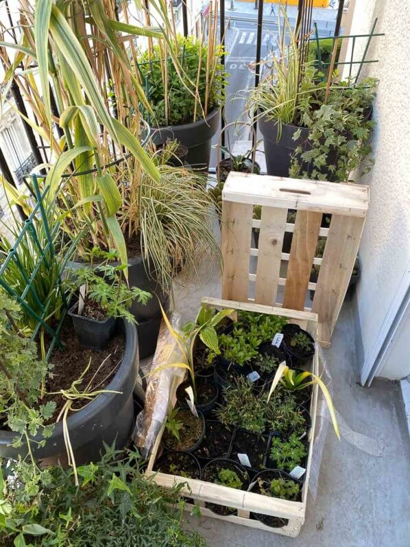 Livraison de jeunes plants de plantes vivaces au début du printemps sur mon balcon parisien, Paris 19e (75)