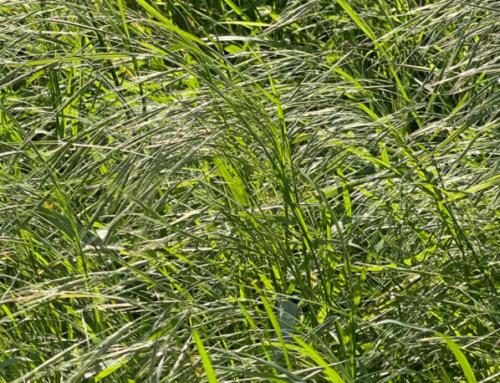 Le soleil dans les herbes folles