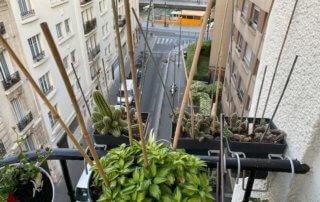 Potées avec des piques pour repousser les pigeons au début du printemps sur mon balcon parisien, Paris 19e (75)