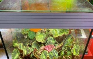 Terrarium avec des bégonias, vitres propres, plantes d'intérieur, Paris 19e (75)