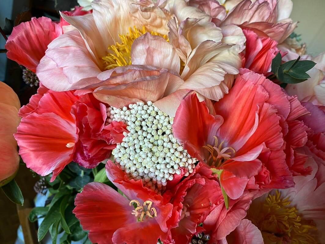 Bouquet de pivoines et de godétias, fleurs coupées, Paris 12e (75)