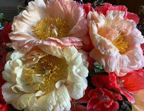 Bouquet printanier de pivoines et de godétias