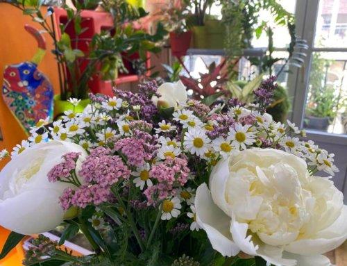 Bouquet Bayonne avec pivoines, achillées et matricaires