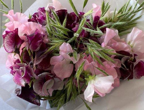 Bouquet aux deux pois de senteur et graminées