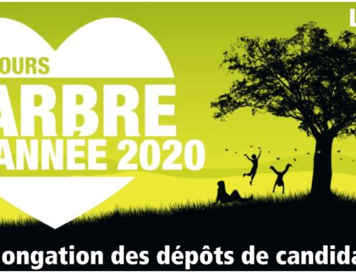 Arbre de l'année 2020 : Prolongation des dépôts de candidatures