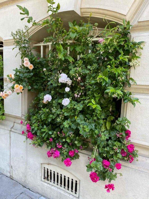 Fenêtre fleurie, avenue de l'Observatoire, Paris 6e (75)