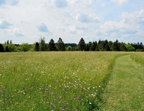 Réouverture de l'Arboretum de Versailles-Chèvreloup 2020 le 5 juin 2020