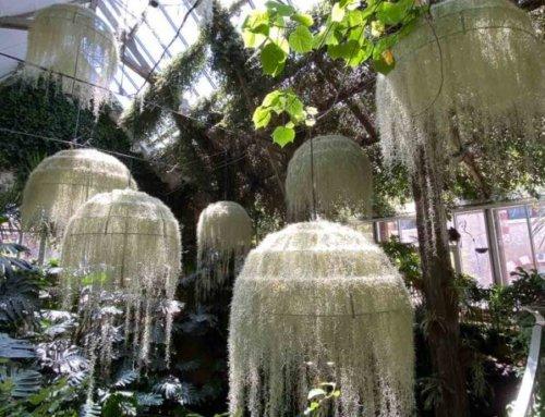 Rainforest, Festival International des Jardins de Chaumont-sur-Loire (41)