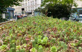 Conteneurs de tri sélectif des déchets avec toiture végétalisme, square Gardette, Paris 11e (75)
