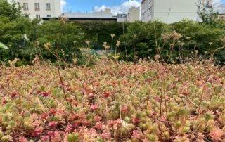 Conteneurs de tri sélectif des déchets avec toiture végétalisme, jardin Françoise Héritier au printemps dans Paris, Paris 14e (75)