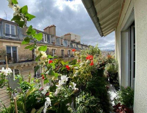 Petit tour sur mon balcon parisien en ce début du mois de juillet