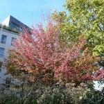 L'automne dans le square Louis Majorelle, Paris 11e (75)