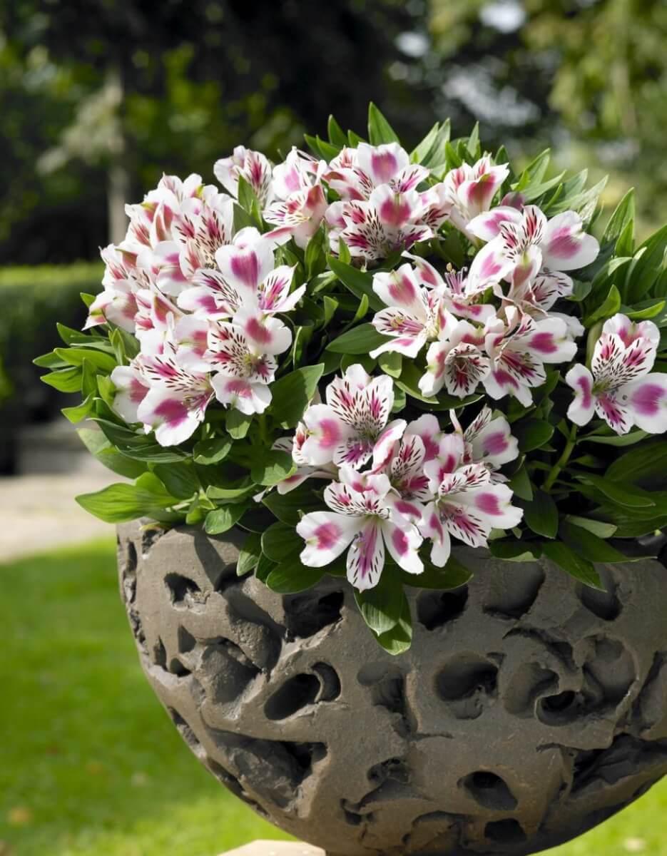 Catalogue printemps 2011 de jeunes plants de Jardin ...