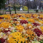 Fleurissement d'automne dans Paris
