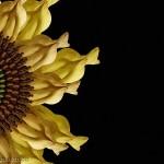 Fleur de tournesol composée de corps humains