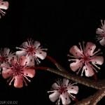 Fleurs composées de corps humains